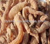Herbe traditionnelle chinoise gastrodia( tianma) Fabrication Les fabricants, fournisseurs, exportateurs, grossistes